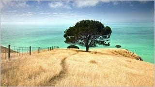 wilderness-pathways-wallpaper-collection-series-two-11