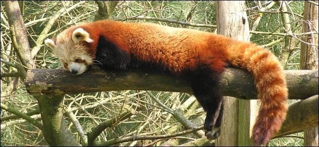 firefox-asleep