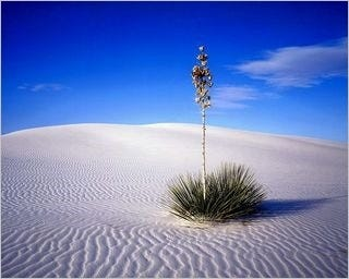 deserts-wallpaper-collection-for-nexus-7-series-one-07