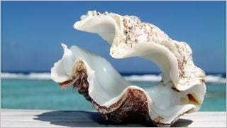 seashells-wallpaper-collection-series-two-02