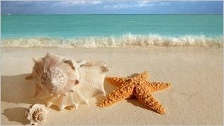 seashells-wallpaper-collection-series-two-03