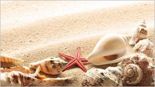 seashells-wallpaper-collection-series-two-07
