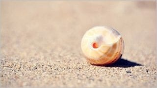 seashells-wallpaper-collection-series-two-08