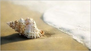 seashells-wallpaper-collection-series-two-10