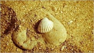 seashells-wallpaper-collection-series-two-11