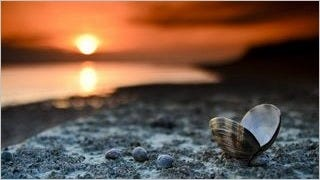 seashells-wallpaper-collection-series-two-15
