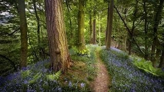 wilderness-pathways-wallpaper-collection-series-two-04