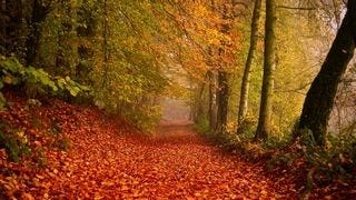 wilderness-pathways-wallpaper-collection-series-two-05