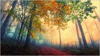wilderness-pathways-wallpaper-collection-series-two-06