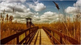 wilderness-pathways-wallpaper-collection-series-two-10