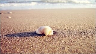 seashells-wallpaper-collection-series-two-06