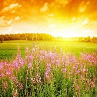 meadows-wallpaper-collection-for-ipad-series-one-03