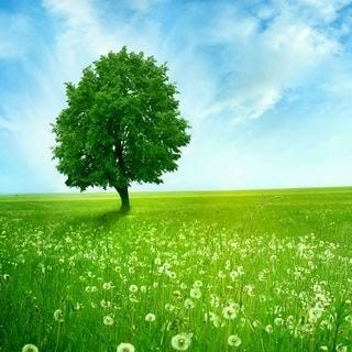 meadows-wallpaper-collection-for-ipad-series-one-05