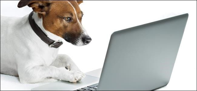 dog-guest-browsing