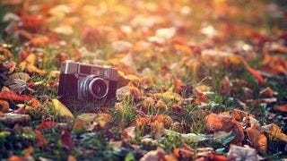 autumn-2013-wallpaper-collection-03