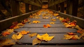 autumn-2013-wallpaper-collection-04