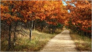 autumn-2013-wallpaper-collection-05