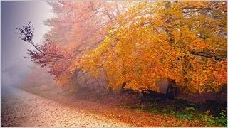 autumn-2013-wallpaper-collection-06