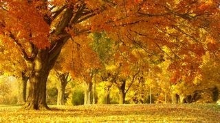 autumn-2013-wallpaper-collection-07