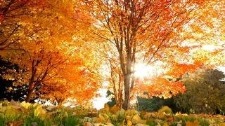 autumn-2013-wallpaper-collection-08