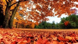 autumn-2013-wallpaper-collection-09