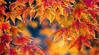 autumn-2013-wallpaper-collection-10