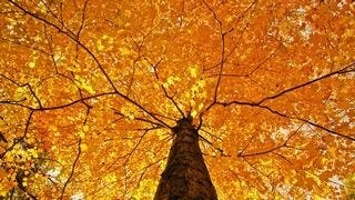 autumn-2013-wallpaper-collection-11