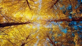 autumn-2013-wallpaper-collection-12