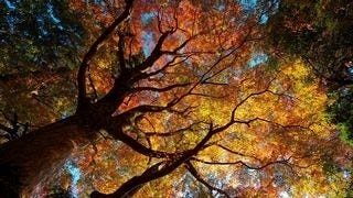 autumn-2013-wallpaper-collection-13