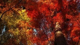 autumn-2013-wallpaper-collection-14