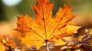 autumn-2013-wallpaper-collection-15