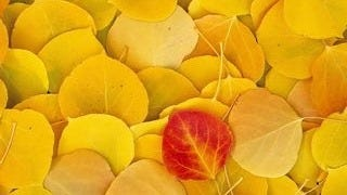 autumn-2013-wallpaper-collection-16