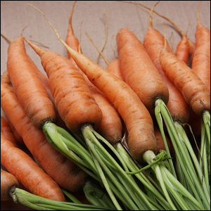 A pile of freshly picked carrots