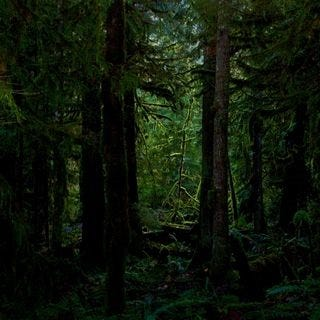 through-the-woods-wallpaper-collection-for-ipad-series-one-04