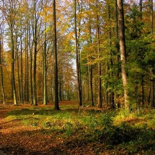 through-the-woods-wallpaper-collection-for-ipad-series-one-07