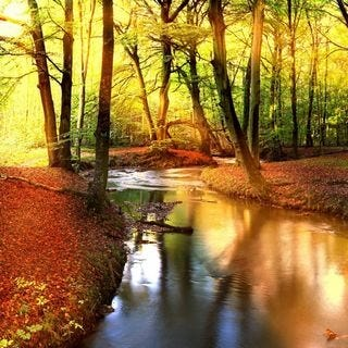 through-the-woods-wallpaper-collection-for-ipad-series-one-08