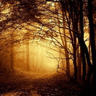 through-the-woods-wallpaper-collection-for-ipad-series-one-10