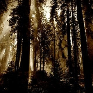 through-the-woods-wallpaper-collection-for-ipad-series-one-12