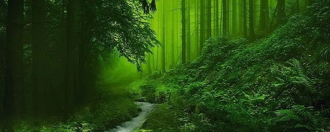 through-the-woods-wallpaper-collection-for-ipad-series-one-00