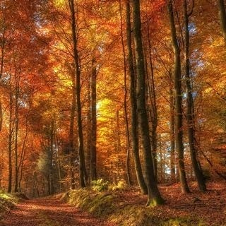 through-the-woods-wallpaper-collection-for-ipad-series-one-09