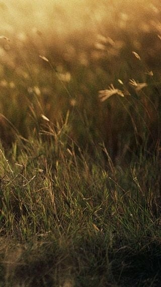 fields-of-grass-wallpaper-collection-for-iphone-series-one-02