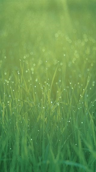 fields-of-grass-wallpaper-collection-for-iphone-series-one-05