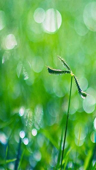 fields-of-grass-wallpaper-collection-for-iphone-series-one-07
