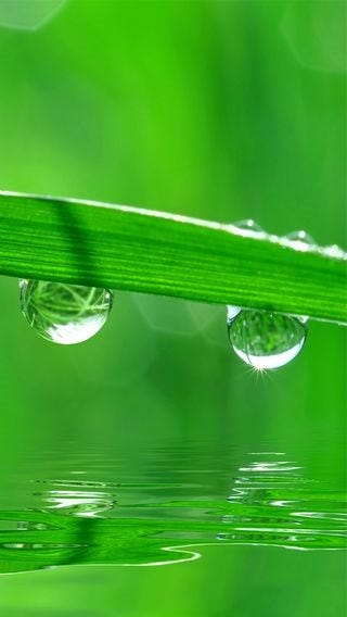 fields-of-grass-wallpaper-collection-for-iphone-series-one-08