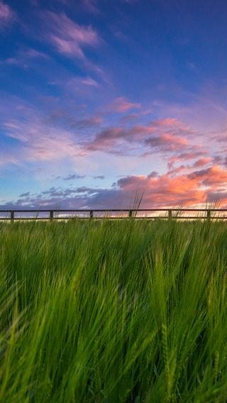 fields-of-grass-wallpaper-collection-for-iphone-series-one-13