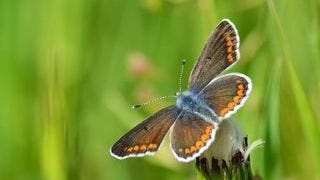 colorful-butterflies-wallpaper-collection-series-two-10