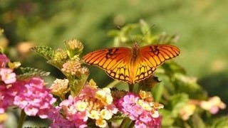 colorful-butterflies-wallpaper-collection-series-two-05
