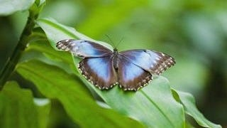 colorful-butterflies-wallpaper-collection-series-two-01