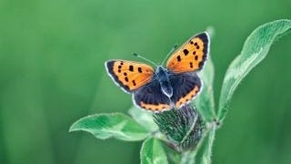 colorful-butterflies-wallpaper-collection-series-two-09