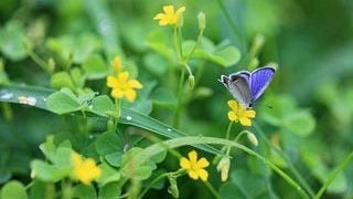 colorful-butterflies-wallpaper-collection-series-two-11